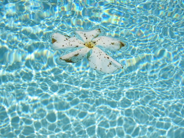 čistá bazénová voda, ve které je květina