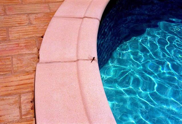 fotografie zahradního bazénu